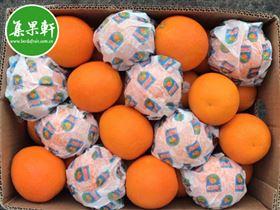 埃及酸橙批发货源 进口夏橙批发商