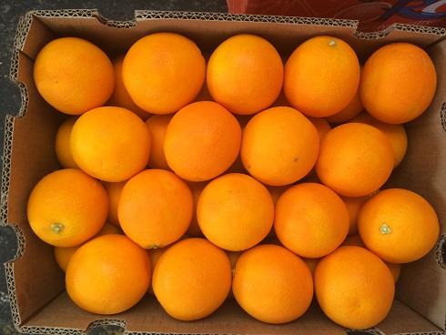 广州进口水果批发新宠  南非酸橙热销产品