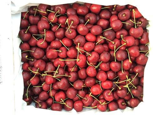 广州进口水果批发新宠  智利车厘子热销产品