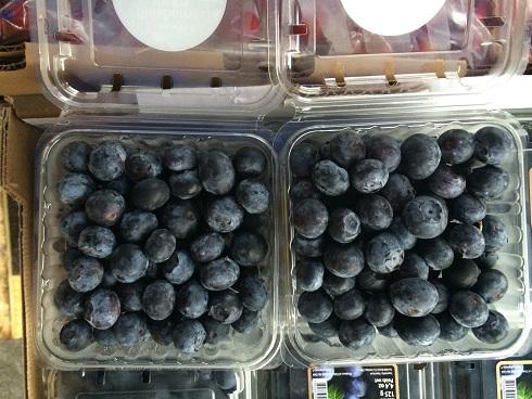 广州进口水果批发新宠  智利蓝莓热销产品