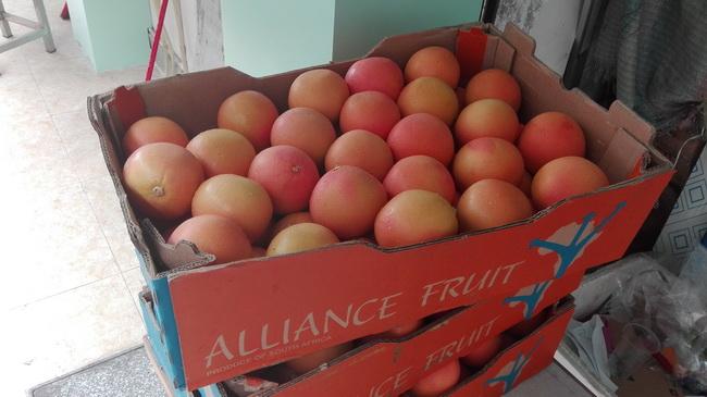 广州进口水果批发市场5月重磅南非柑橘类产品来袭 南非西柚现货特惠尝鲜价