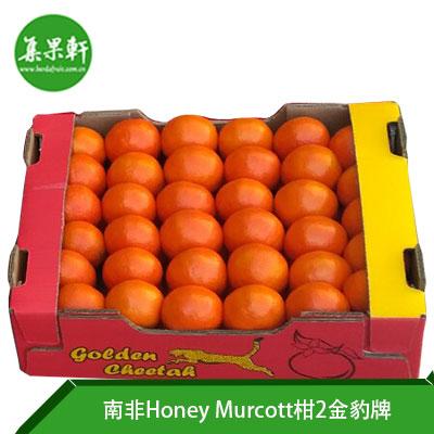 南非进口Honey Murcott柑 2