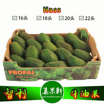 智利进口牛油果Hass品种 | PROPAL牌4.5公斤20头规格