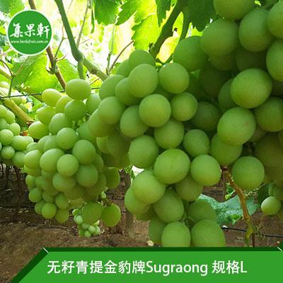 南非进口无籽青提Sugraone品种 | 金豹牌4.5公斤L规格