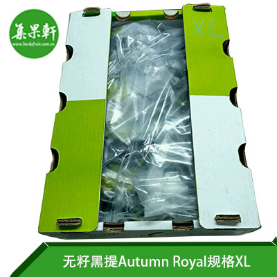 南非其它品牌皇家秋天无籽黑提Autumn Royal XL