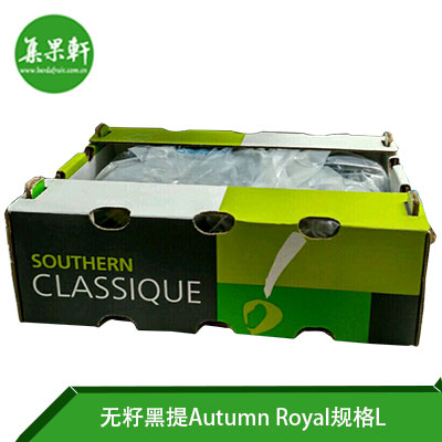 南非其它品牌皇家秋天无籽黑提Autumn Royal L