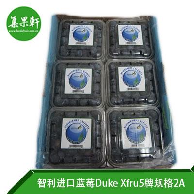 智利进口蓝莓Duke品种 | Xfru5牌1.5公斤2A规格