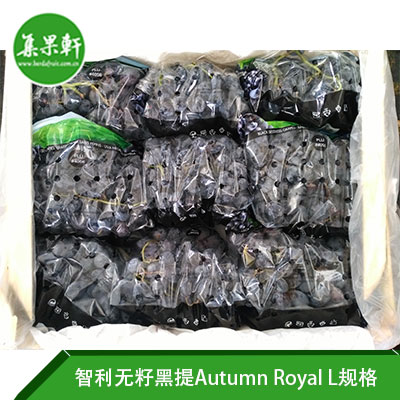 智利无籽黑提Autumn Royal L