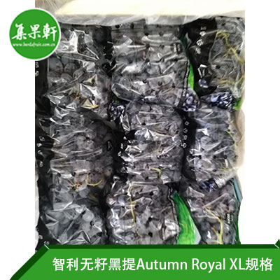 智利无籽黑提Autumn Royal XL