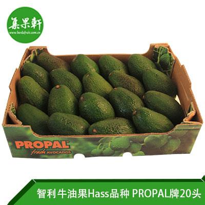 智利进口牛油果Hass品种 | PROPAL牌4公斤20头规格