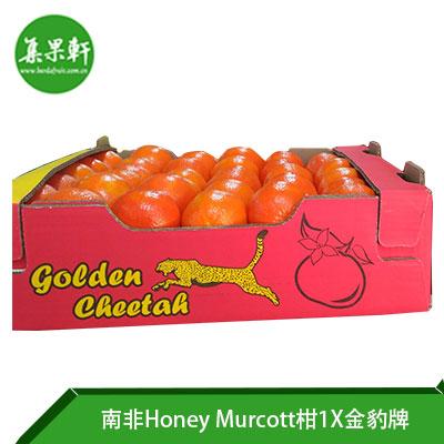 南非进口Honey Murcott柑1X