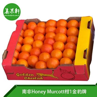 南非进口Honey Murcott柑 1