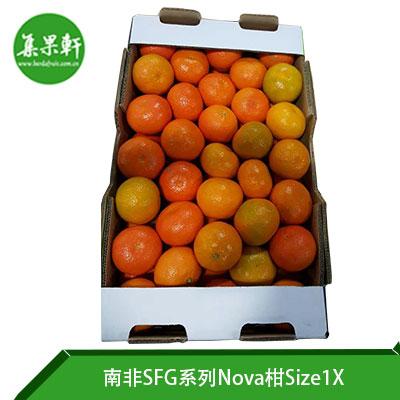 南非SFG系列Nova柑Size1X