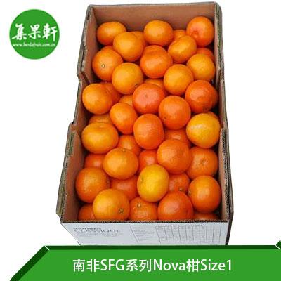 南非SFG系列Nova柑Size1
