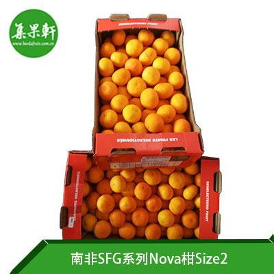 南非SFG系列Nova柑Size2