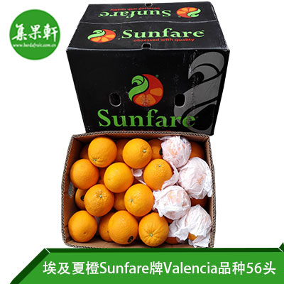 埃及进口夏橙Valencia品种 | Sunfare牌15公斤56头规格