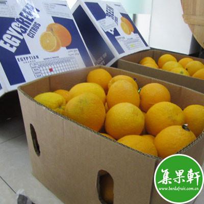 埃及进口夏橙Valencia品种 | Egygreen牌15公斤56头规格