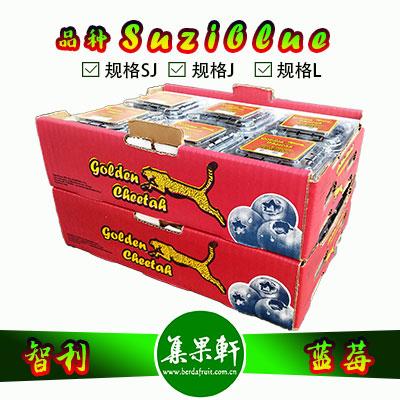 智利进口金豹鲜果牌蓝莓货源批发,品种Suziblue苏丝蓝莓供应,1.5kg公斤,12小盒装,适合超市热卖