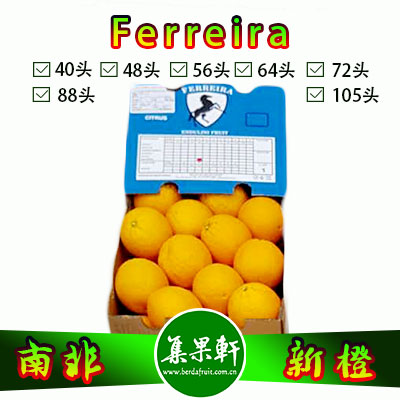 南非进口Ferreira牌Midknight品种新橙15公斤