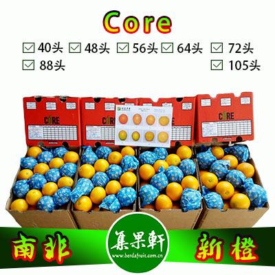 南非进口Core牌品种Midknight新橙15公斤