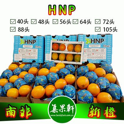 南非进口HNP牌品种Midknight新橙15公斤