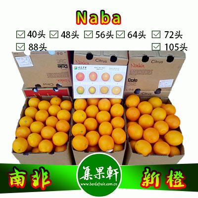 南非Naba新橙