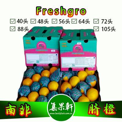 南非进口脐橙Navel品种 |Freshgro牌15公斤