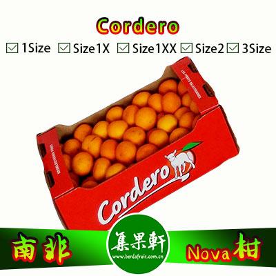南非Nova柑Cordero牌