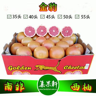 南非进口红宝石西柚Star Ruby品种 | 金豹牌17公斤