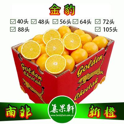 南非金豹牌品种Valencia新橙