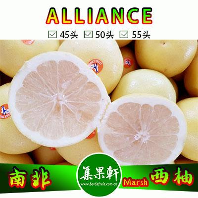 南非白肉西柚Marsh品种ALLIANCE品牌17公斤45头