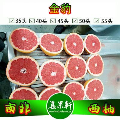 南非进口红宝石西柚Star Ruby品种 | 金豹牌17公斤35头