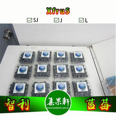 智利进口蓝莓货源批发,重量1.5公斤,规格AA