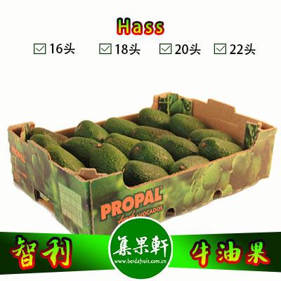 智利进口牛油果Hass品种 | PROPAL牌4.5公斤18头规格
