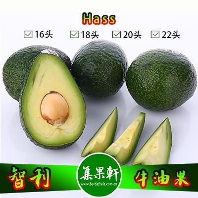 智利进口牛油果Hass品种 | PROPAL牌4.5公斤16头规格
