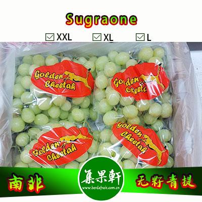 南非进口无籽青提批发Sugraone绿宝石品种 | 金豹鲜果品牌4.5公斤装L规格,口感堪比香印,适用于超市、水果店连锁货源