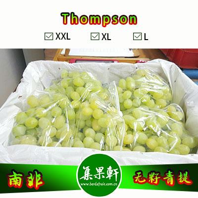 南非进口Thompson无籽青提汤姆森品种货源批发,品牌katope 重量4.5公斤规格XL,5箱起批