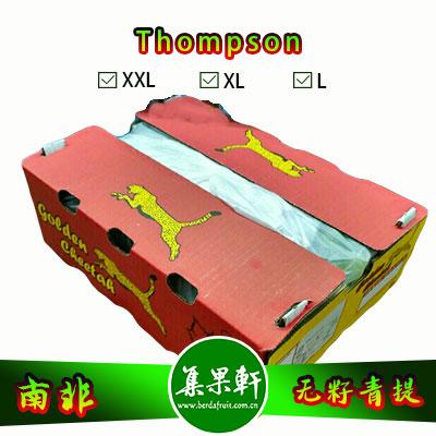 南非进口Thompson无籽青提汤姆森品种货源批发,品牌金豹鲜果, 重量4.5公斤规格L,5箱起批