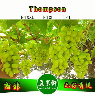 南非进口Thompson无籽青提汤姆森品种货源批发,品牌金豹鲜果, 重量4.5公斤规格XL,5箱起批