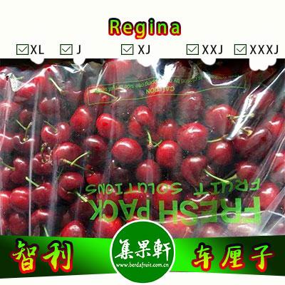 智利进口车厘子批发货源,品种格伦红Regina,重量10斤装,规格J,果色大枣红,个头中等,果径短,易脱核大樱桃