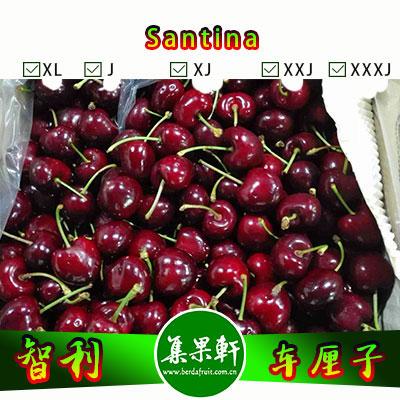 智利进口车厘子批发Santina品种 | 5公斤JJD规格