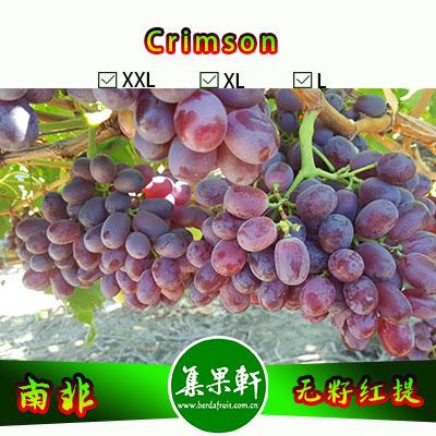 南非进口Crimson克瑞森葡萄货源,Southern Classique牌无籽红提批发,重量4.5公斤,规格L,一级货源供应,鲜食口感佳葡萄