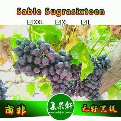 南非进口无籽黑提批发玫瑰香葡萄Sable品种货源, Dole牌重量4.5公斤XL规格,农场直供,全程冷链,价格优惠,量大价格从优