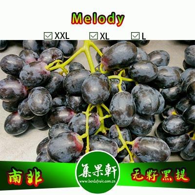 南非进口无籽黑提批发Melody旋律品种 , Mooi牌重量4.5公斤L规格黑葡萄,好吃价格又实惠