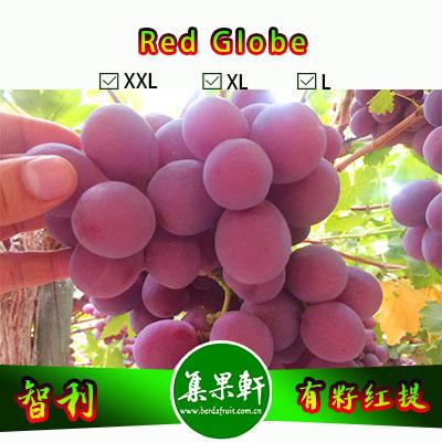 智利进口有籽红提Red Globe品种 | 金豹牌8公斤J规格