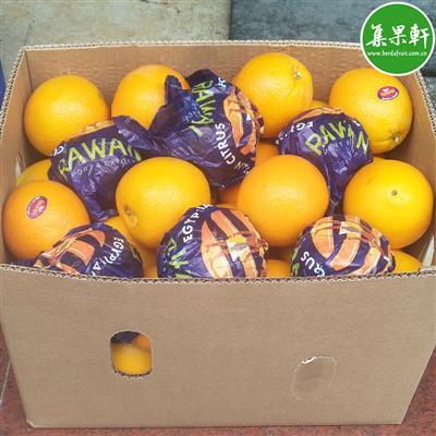 埃及脐橙批发货源15公斤 进口水果批发货源供应商